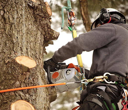 A1 Affordable Tree and Lawn LLC employee cutting a tree down